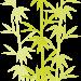 七夕の竹が枯れないための保存方法と鉢植えについてを紹介